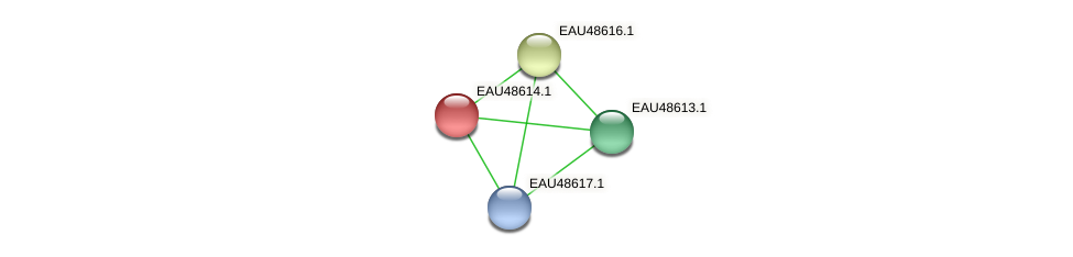 R2601_03538 protein (Pelagibaca bermudensis) - STRING interaction network