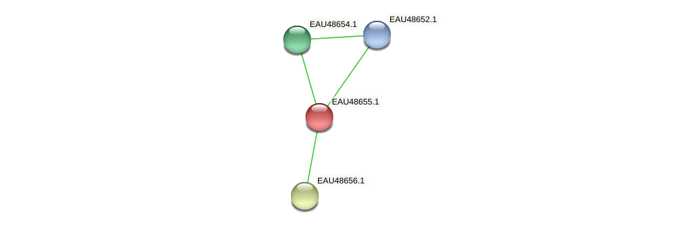 R2601_03743 protein (Pelagibaca bermudensis) - STRING interaction network