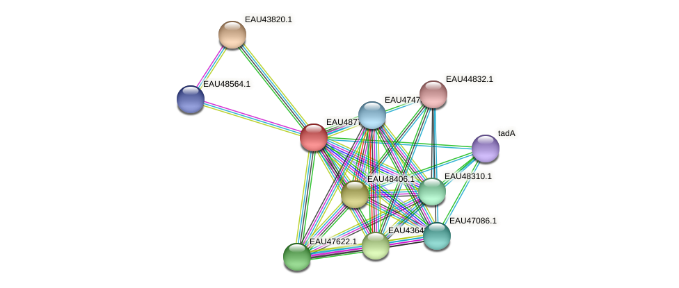 R2601_04353 protein (Pelagibaca bermudensis) - STRING interaction network