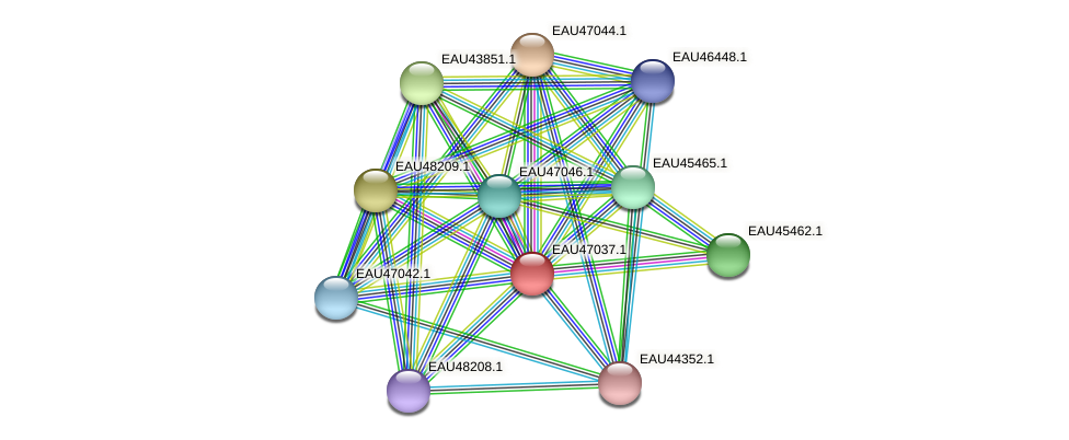 R2601_04698 protein (Pelagibaca bermudensis) - STRING interaction network
