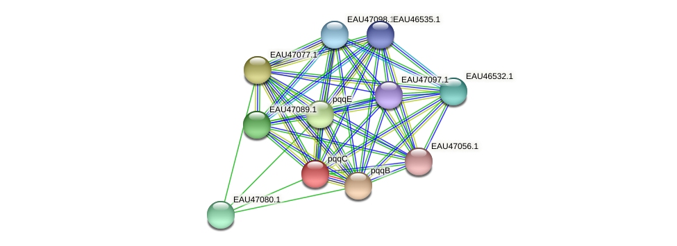 pqqC protein (Pelagibaca bermudensis) - STRING interaction network