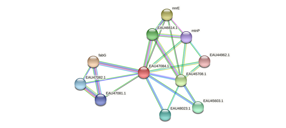 R2601_04933 protein (Pelagibaca bermudensis) - STRING interaction network