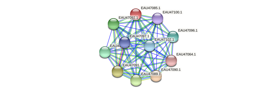 R2601_04938 protein (Pelagibaca bermudensis) - STRING interaction network