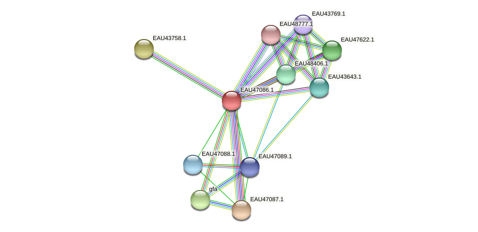 R2601_04943 protein (Pelagibaca bermudensis) - STRING interaction network