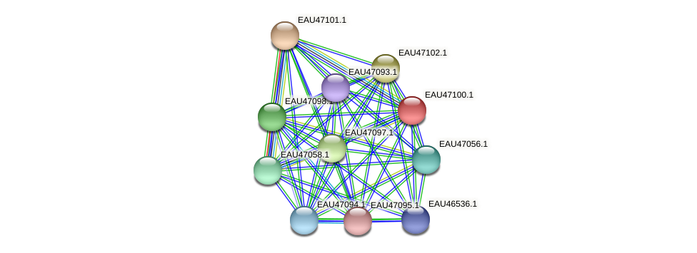 R2601_05013 protein (Pelagibaca bermudensis) - STRING interaction network