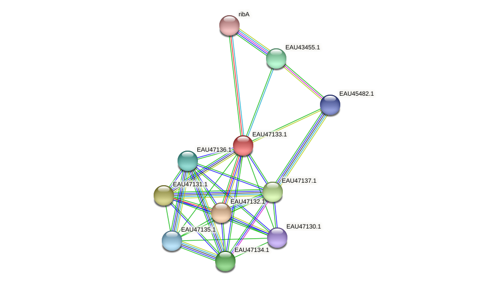 R2601_05178 protein (Pelagibaca bermudensis) - STRING interaction network