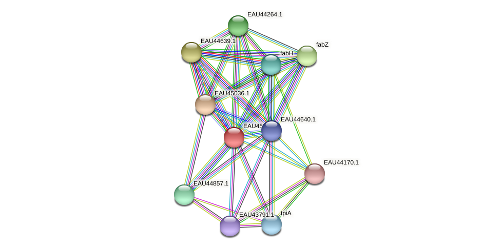 R2601_05423 protein (Pelagibaca bermudensis) - STRING interaction network