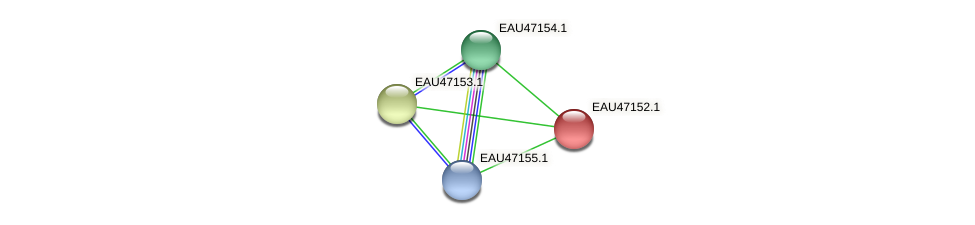 R2601_05498 protein (Pelagibaca bermudensis) - STRING interaction network