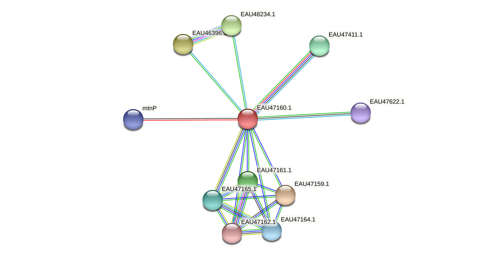 R2601_05538 protein (Pelagibaca bermudensis) - STRING interaction network