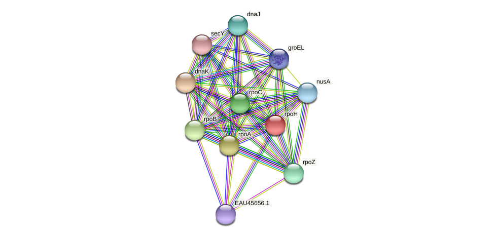 rpoH protein (Pelagibaca bermudensis) - STRING interaction network