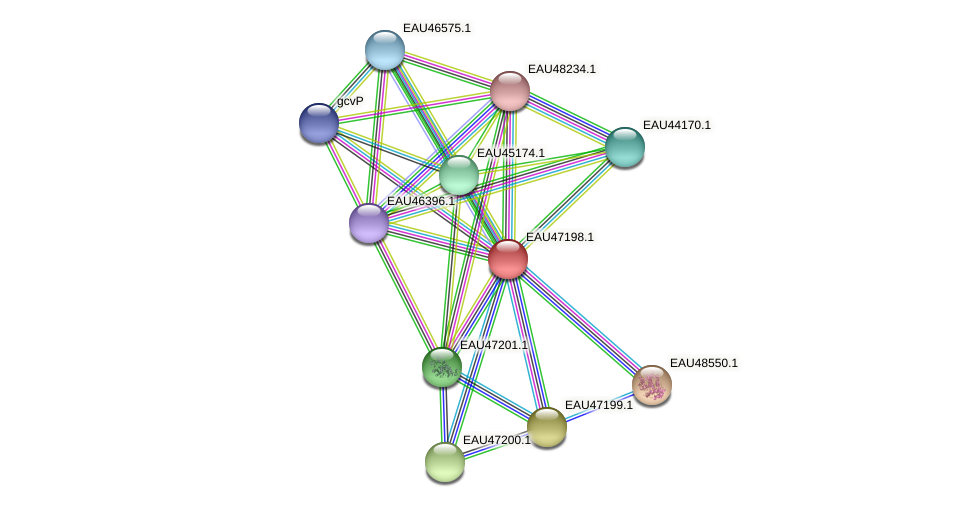 R2601_05728 protein (Pelagibaca bermudensis) - STRING interaction network