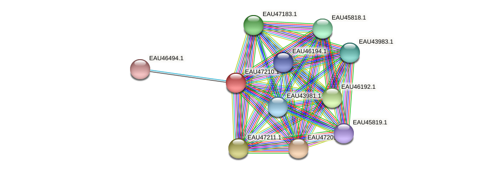 R2601_05788 protein (Pelagibaca bermudensis) - STRING interaction network
