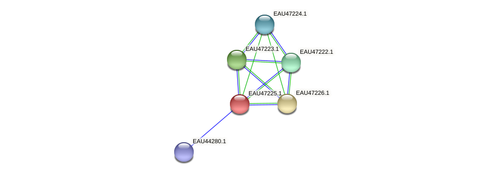 R2601_05863 protein (Pelagibaca bermudensis) - STRING interaction network