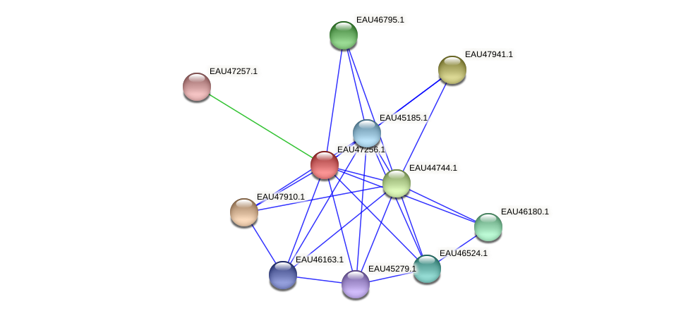 R2601_06018 protein (Pelagibaca bermudensis) - STRING interaction network