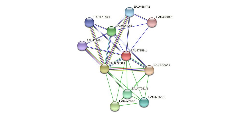 R2601_06033 protein (Pelagibaca bermudensis) - STRING interaction network