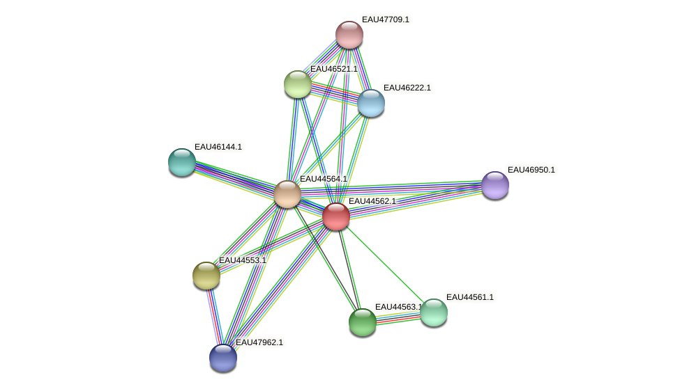 R2601_06213 protein (Pelagibaca bermudensis) - STRING interaction network