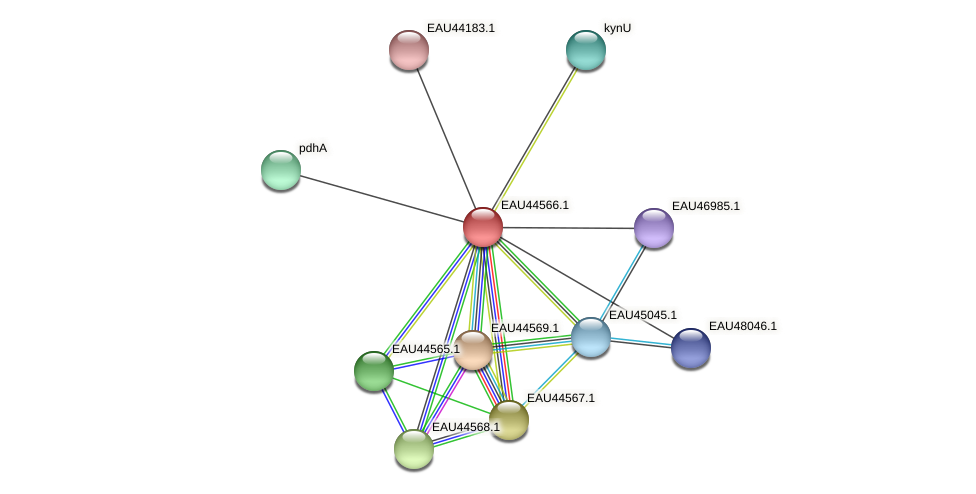 R2601_06233 protein (Pelagibaca bermudensis) - STRING interaction network