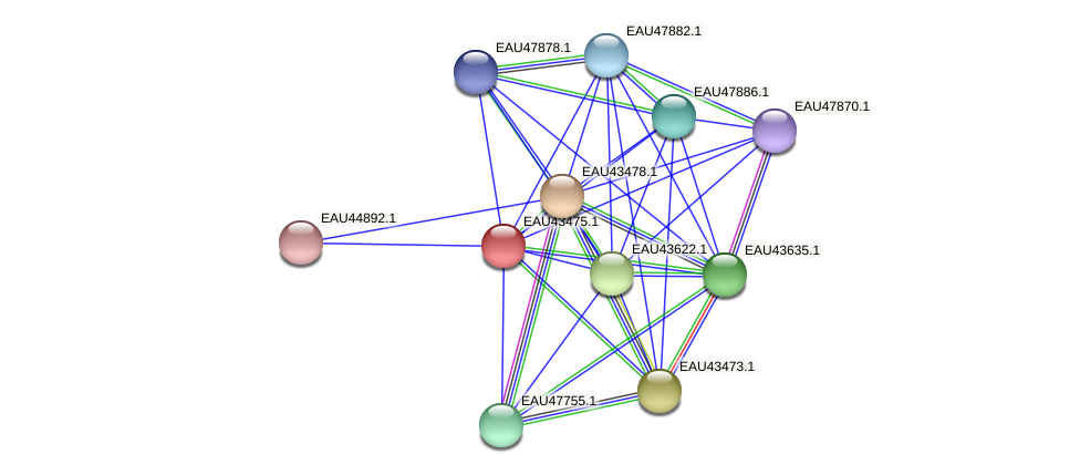 R2601_06333 protein (Pelagibaca bermudensis) - STRING interaction network