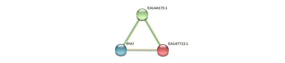 R2601_06373 protein (Pelagibaca bermudensis) - STRING interaction network