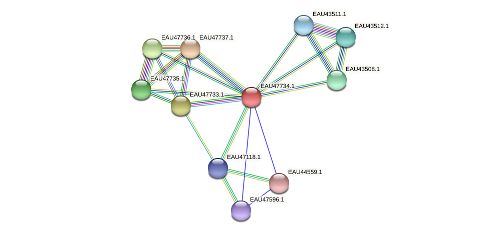 R2601_06478 protein (Pelagibaca bermudensis) - STRING interaction network