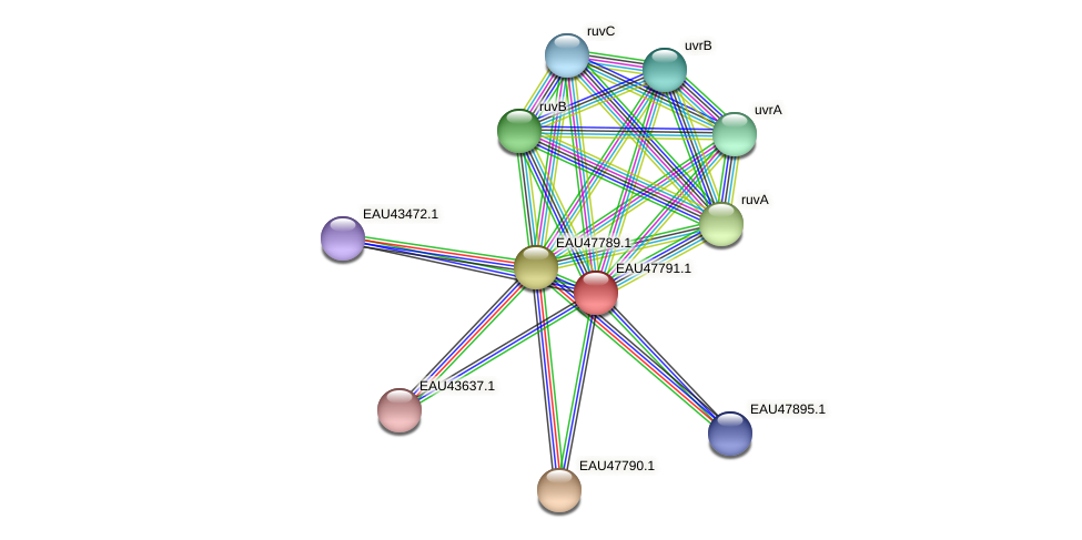 R2601_06763 protein (Pelagibaca bermudensis) - STRING interaction network