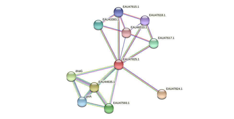R2601_06933 protein (Pelagibaca bermudensis) - STRING interaction network