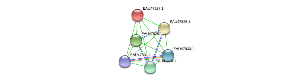 R2601_06943 protein (Pelagibaca bermudensis) - STRING interaction network