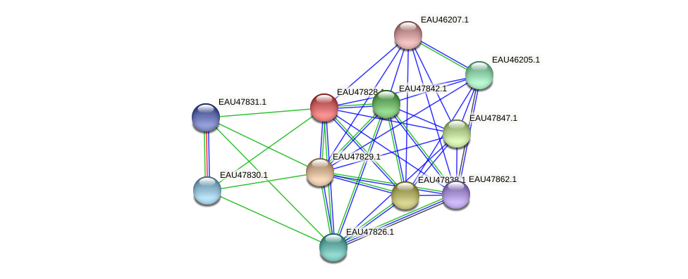 R2601_06948 protein (Pelagibaca bermudensis) - STRING interaction network
