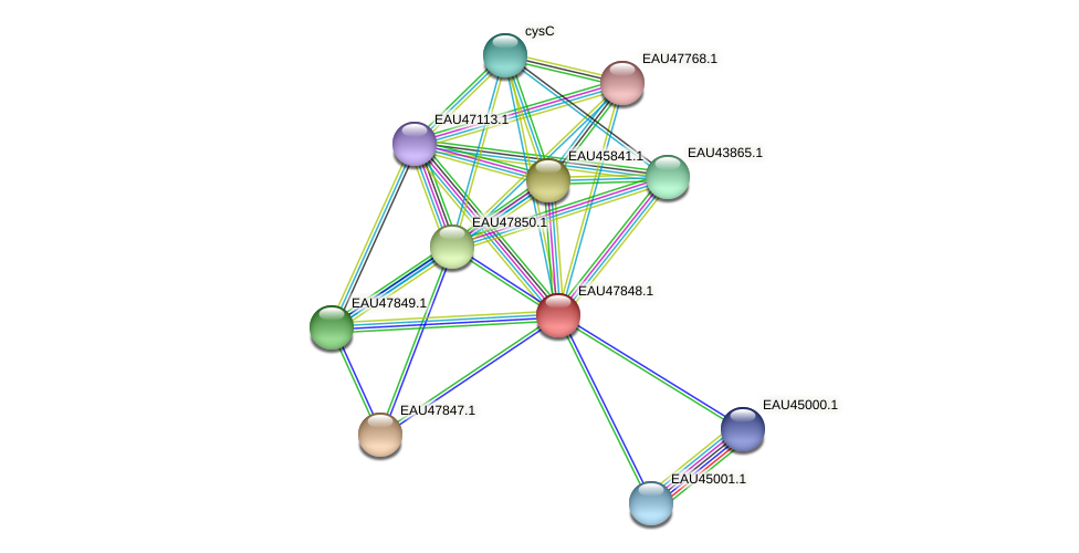 R2601_07048 protein (Pelagibaca bermudensis) - STRING interaction network