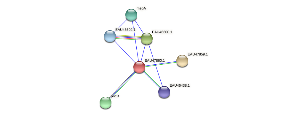 R2601_07108 protein (Pelagibaca bermudensis) - STRING interaction network