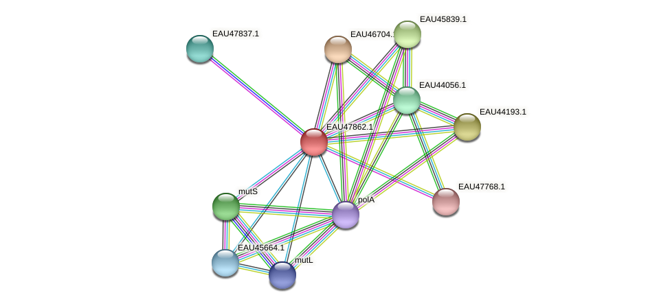 R2601_07118 protein (Pelagibaca bermudensis) - STRING interaction network
