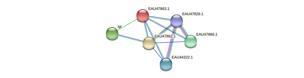 R2601_07123 protein (Pelagibaca bermudensis) - STRING interaction network