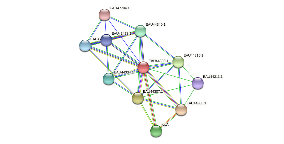 R2601_07313 protein (Pelagibaca bermudensis) - STRING interaction network