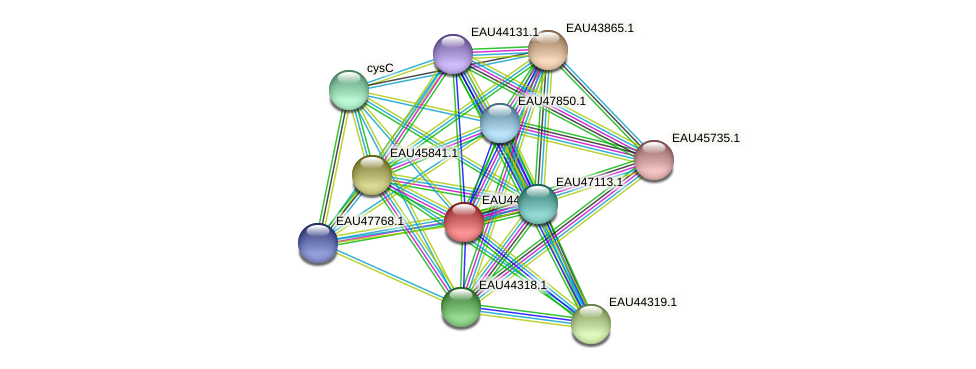 R2601_07368 protein (Pelagibaca bermudensis) - STRING interaction network