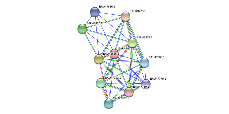 R2601_07498 protein (Pelagibaca bermudensis) - STRING interaction network