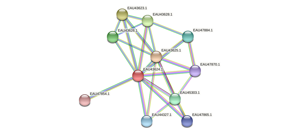 R2601_07508 protein (Pelagibaca bermudensis) - STRING interaction network