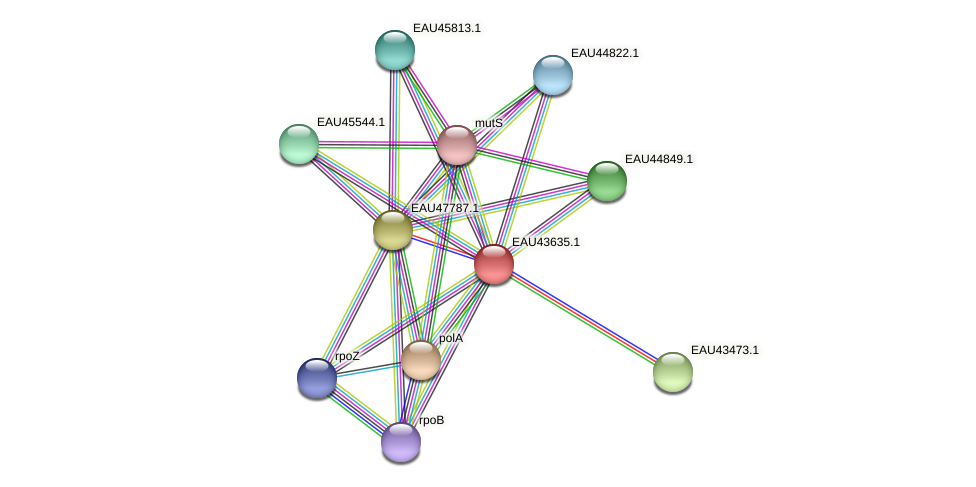 R2601_07563 protein (Pelagibaca bermudensis) - STRING interaction network