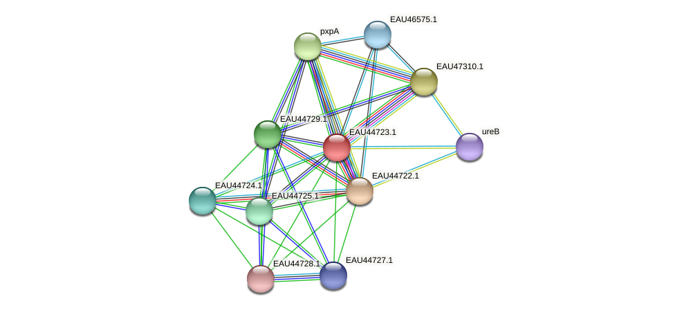 R2601_07653 protein (Pelagibaca bermudensis) - STRING interaction network