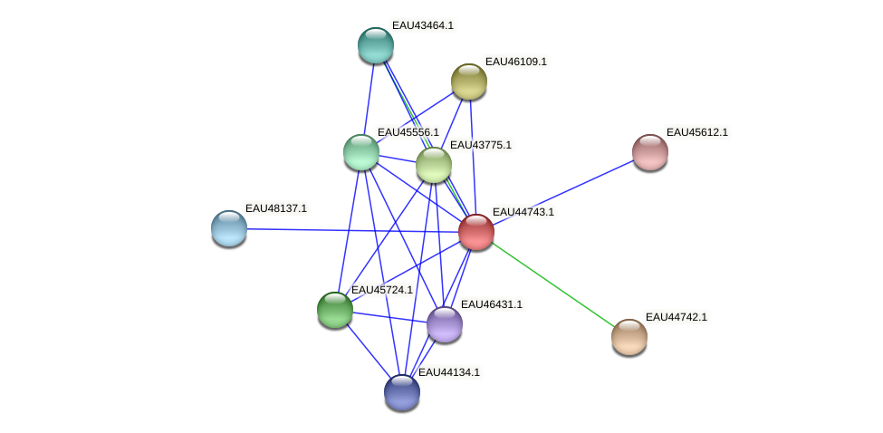 R2601_07753 protein (Pelagibaca bermudensis) - STRING interaction network