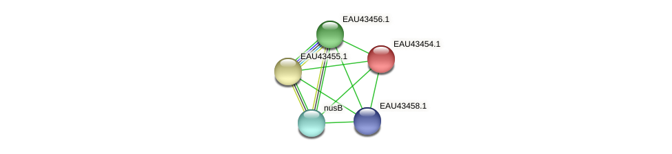 R2601_07771 protein (Pelagibaca bermudensis) - STRING interaction network