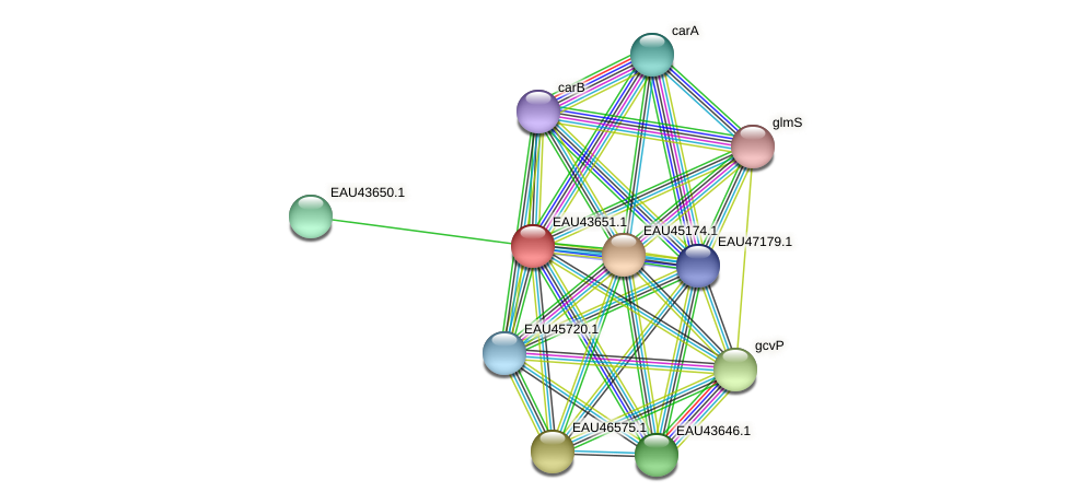 R2601_08006 protein (Pelagibaca bermudensis) - STRING interaction network