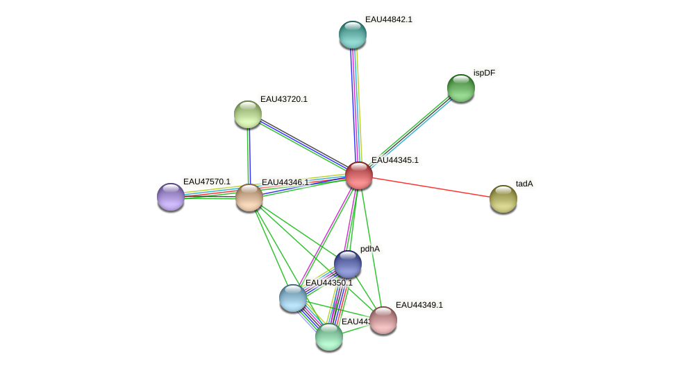R2601_08356 protein (Pelagibaca bermudensis) - STRING interaction network