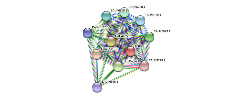 pdhA protein (Pelagibaca bermudensis) - STRING interaction network