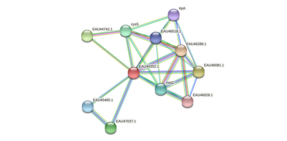 R2601_08391 protein (Pelagibaca bermudensis) - STRING interaction network