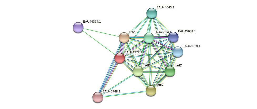 R2601_08491 protein (Pelagibaca bermudensis) - STRING interaction network