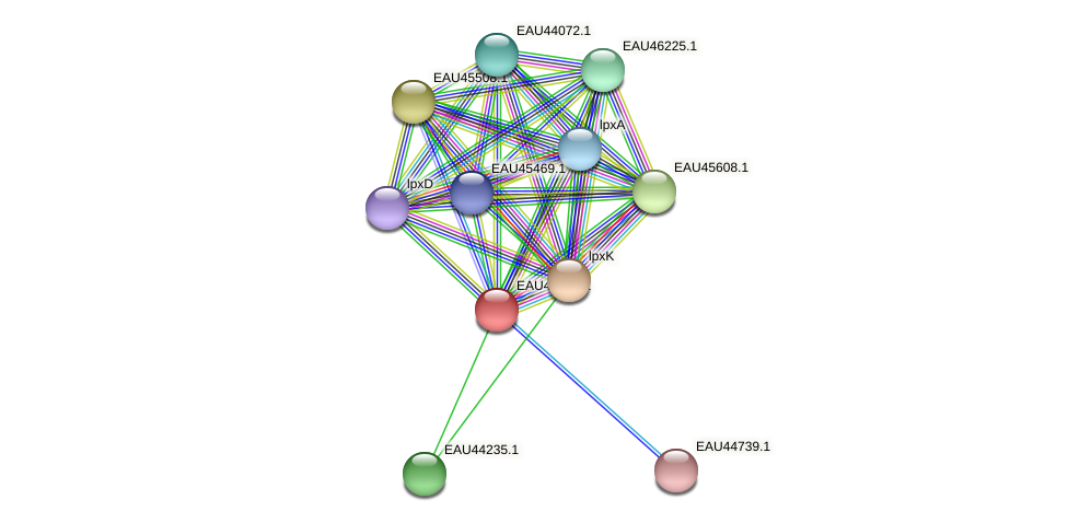 R2601_08656 protein (Pelagibaca bermudensis) - STRING interaction network