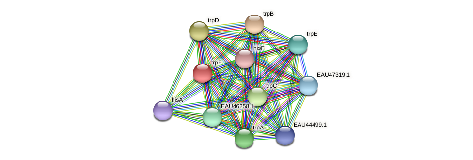 trpF protein (Pelagibaca bermudensis) - STRING interaction network