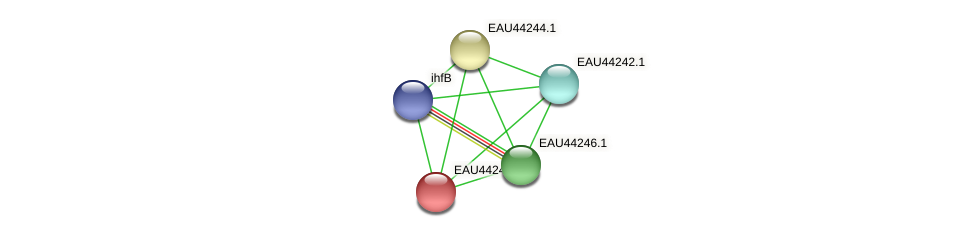 R2601_08701 protein (Pelagibaca bermudensis) - STRING interaction network