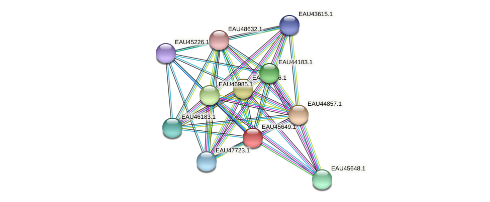 R2601_08878 protein (Pelagibaca bermudensis) - STRING interaction network
