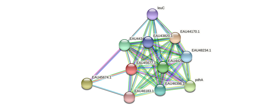 R2601_09018 protein (Pelagibaca bermudensis) - STRING interaction network